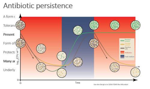 Antibiotic persistence